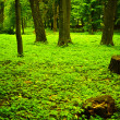 Green forest — Stock Photo #1707378