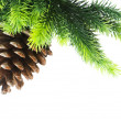 Cone and christmas tree isolated — Stock Photo #2874464