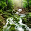 Forest waterfall — Stock Photo #15551947