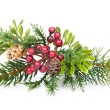 Christmas tree branch with holly decor — Stock Photo #33556397