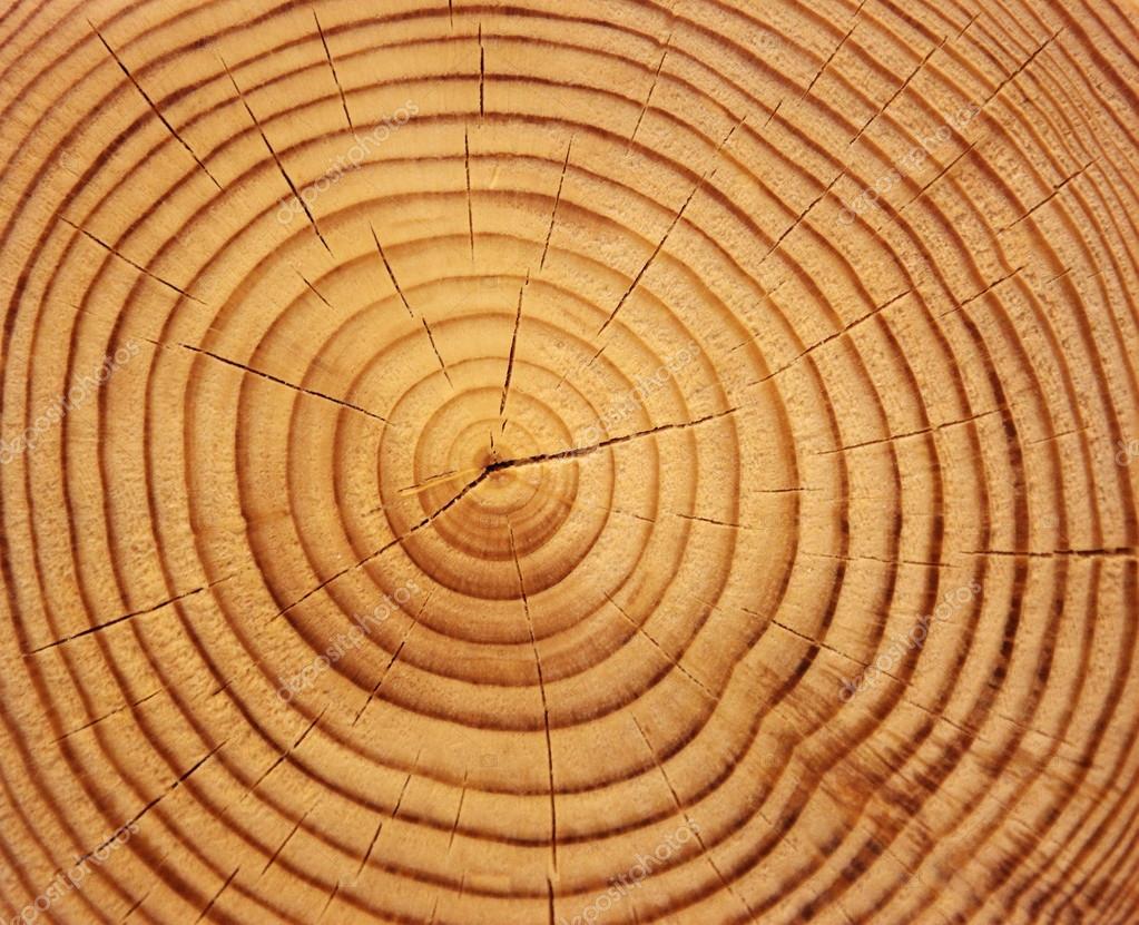 coupe d 39 arbre photographie spopov 14341773. Black Bedroom Furniture Sets. Home Design Ideas