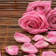 Pink roses — Stock Photo #1577233