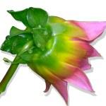 Flower of dahlia — Stock Photo #2245075