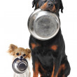 Rottweiler chihuahua and food bowl — Stock Photo #10760292