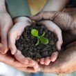 Farmers family holding a fresh young plant — Stock Photo #28286797