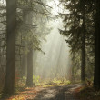 Misty coniferous forest — Stock Photo #7630767