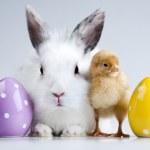 Happy Easter — Stock Photo #7375240