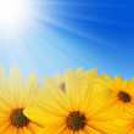 Yellow flowers in sun — Stock Photo #1986118