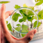 Green Seedling laboratory — Stock Photo #3227693