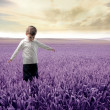 Lavender field — Stock Photo #3389359