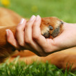 Dog paw and hand shaking — Stock Photo #2961654