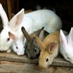 Bunny Rabbits family — Stock Photo #5739508