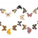 Butterfly heart sharp frame — Stock Photo #11754767