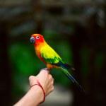 Parrot — Stock Photo #8148174
