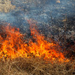 Dry grass burning in the forest, spring day, strong wind — Stock Photo #9807129