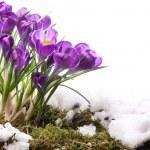 Art Beautiful Spring Flowers — Stock Photo #9259332