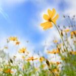 Flowers — Stock Photo #3716986