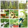 Collage of fresh herbs on balcony garden — Stock Photo #26937495