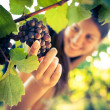 Grapes in a vineyard being checked by a female vintner — Stock Photo #11303049