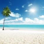Palm and sea — Stock Photo #4776756
