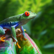 Red-Eyed Tree Frog — Stock Photo #6298379