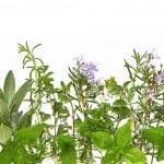 Herb Border — Stock Photo #5526354