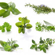 Herb Collection — Stock Photo #5526604