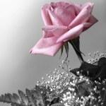 petali di rosa — Foto Stock #5875196