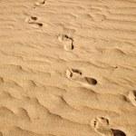 Footprints on sand — Stock Photo #6286986