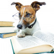 DOG LEARNING — Foto Stock #6315268
