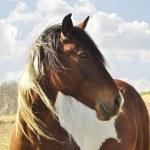 Horse portrait — Stock Photo #6680831