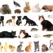 Collage of different cute animals — Stock Photo #32848261