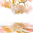 Postcard. orchids on the water — Stock Photo #6689255