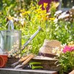 Gardening — Stock Photo #11443506