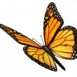 Monarch Butterfly Angled — Stock Photo #22537757