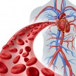 Blood Heart Circulation — Stock Photo #47745431