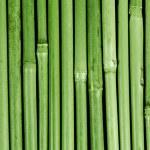 Bambus asien wald china panda umwelt wellness zen — Stock Photo #8143516