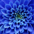 Details of blue flower for background or texture — Stock Photo #10424280