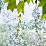 Foliage on a Waterfall — Stock Photo #9132095