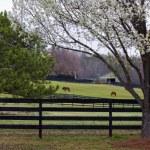 Horse Farm — Stock Photo #8483587