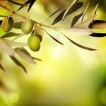 Oliven — Stockfoto #10676993