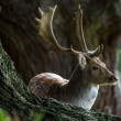 Deer in a forest — Stock Photo #32496455