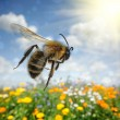 Bee flying over colorful flower field — Stock Photo #25606537