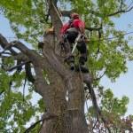 Tree surgeon — Stock Photo #14395939