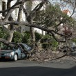 Car trapped under fallen tree — Stock Photo #32909327