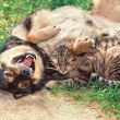 Dog and cat playing — Stock Photo #46764863