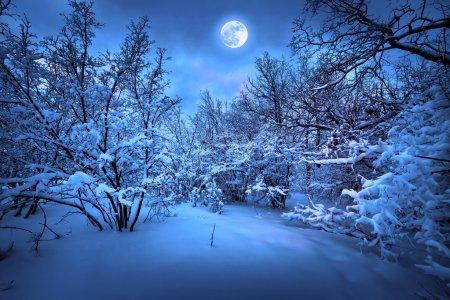 冬季木材月夜