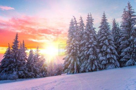 日落大道上冬季景观。保加利亚