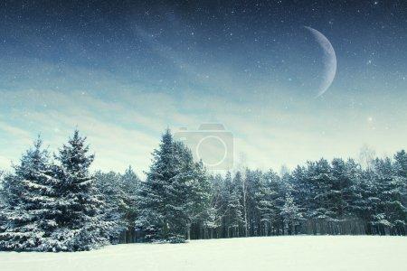 冬天的夜晚,在公园里。这幅图像由 na 装备的元素