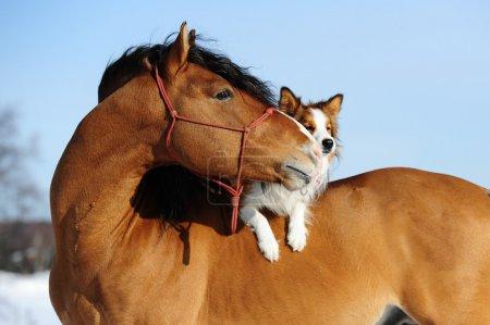 红马和狗都是朋友_高清图片_邑石网